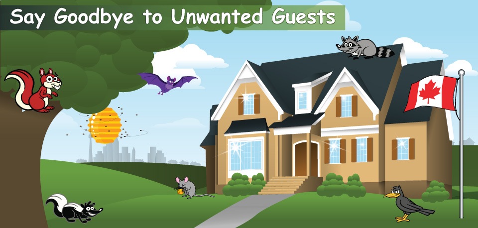 Say Goodbye to Unwanted Guests