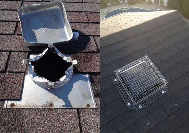 Raccoon entered through roof vent